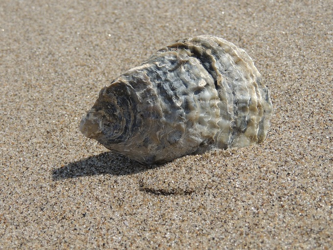 seashell150722