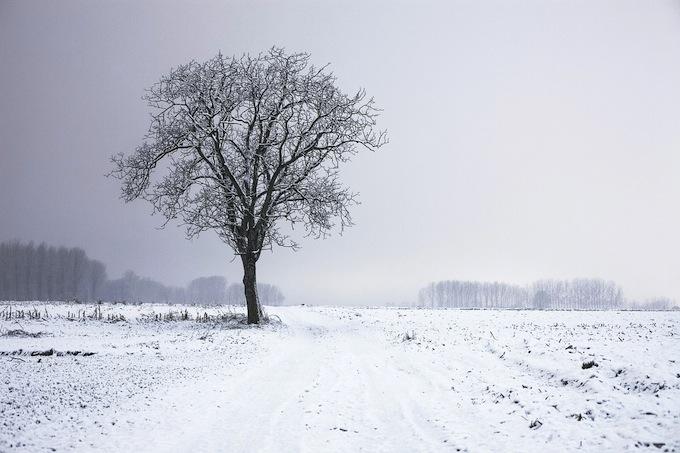 tree150812