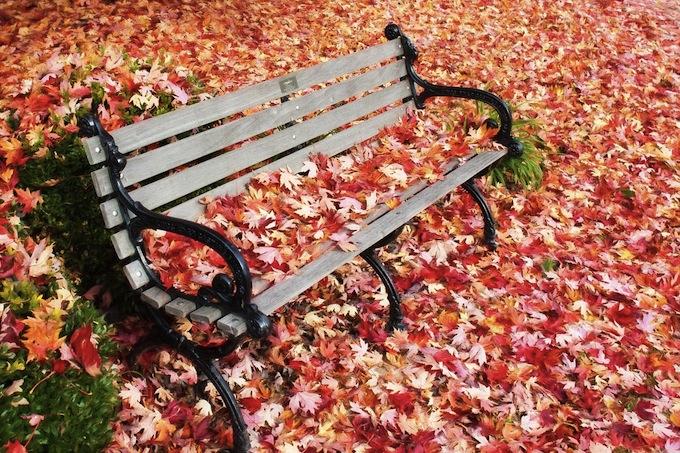 autumn151121