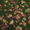 秋はどこへ消えた?