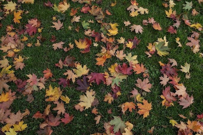 leaves151116